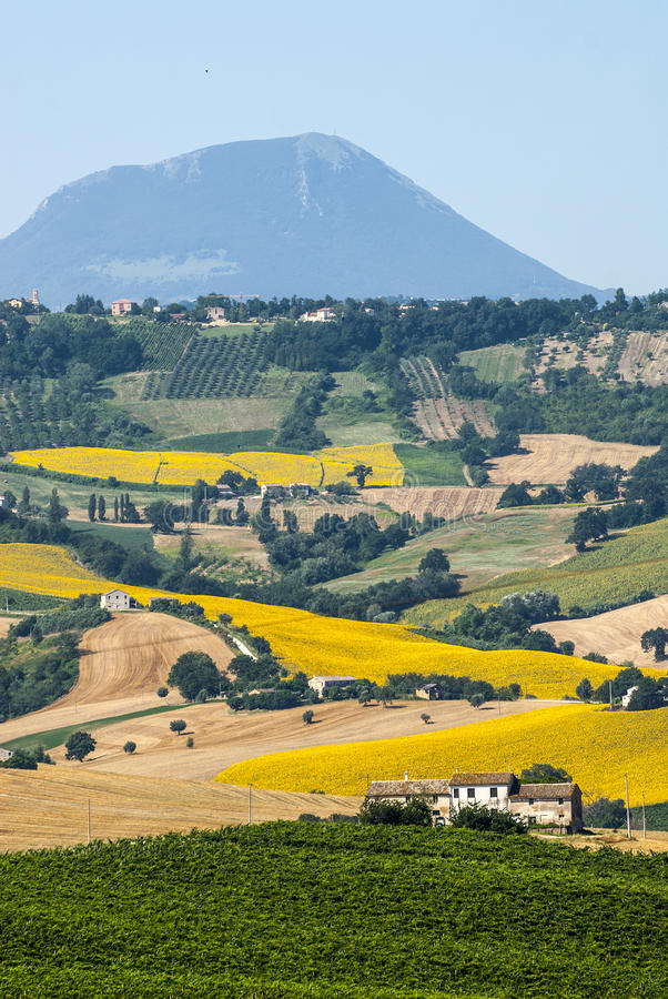 Download Marches (Italy), landscape stock photo. Image of field - 28899578