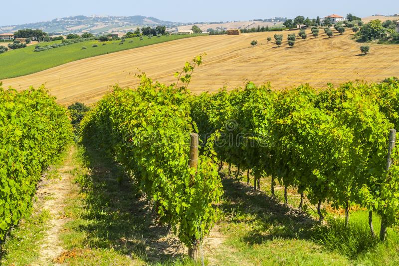 Download Marches (Italy) - Landscape Stock Photos - Image: 29078063