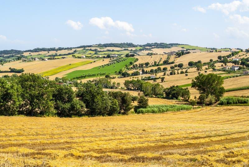Marches (Italy) - Landscape. Between Potenza Picena and Montecosaro, near Macerata, at summer royalty free stock photo