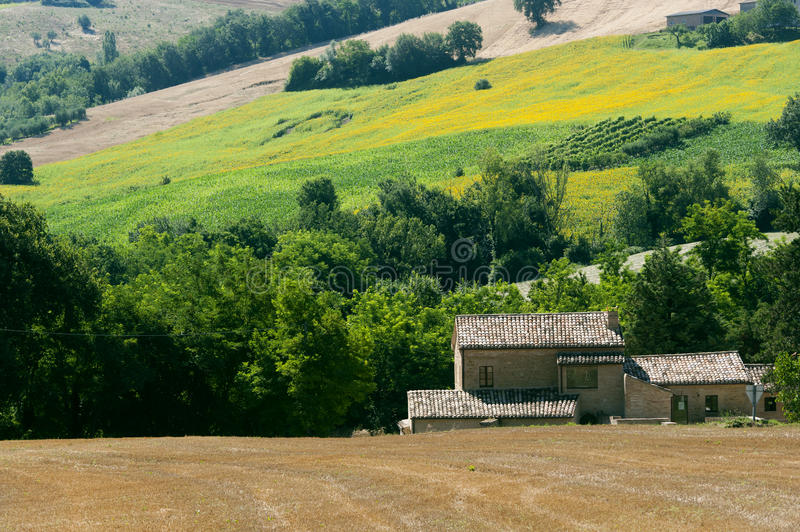 Download Marches (Italy) - Landscape At Summer Stock Image - Image: 20563413