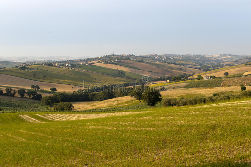 Download Marches (Italy) - Landscape At Summer Stock Image - Image: 20686089