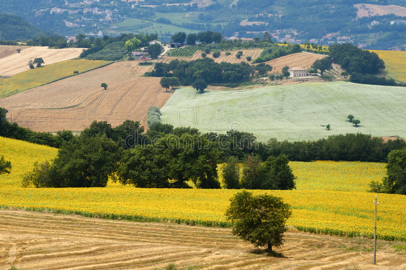 Download Marches (Italy) - Landscape At Summer Stock Photography - Image: 21133642