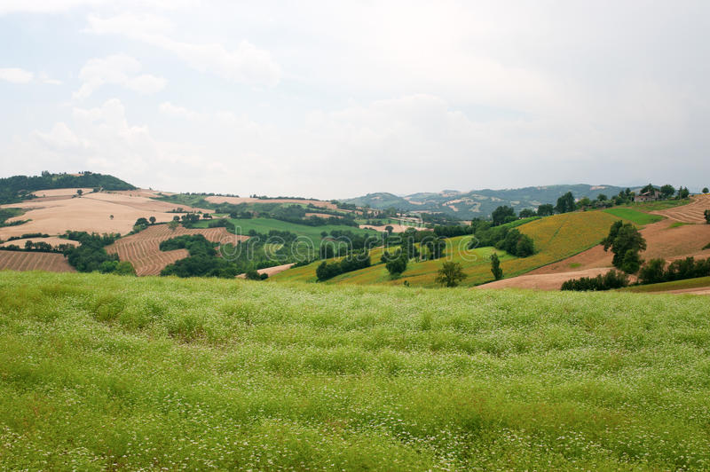 Marches (Italy) - Landscape At Summer Stock Image