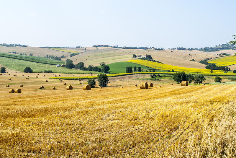 Download Marches Landscape stock photo. Image of outdoor, bale - 28798204