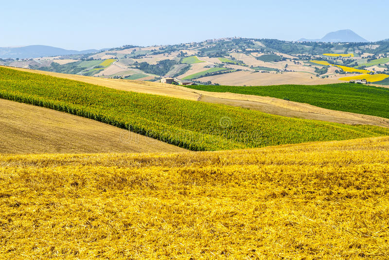 Download Marches Landscape Royalty Free Stock Photography - Image: 28816467