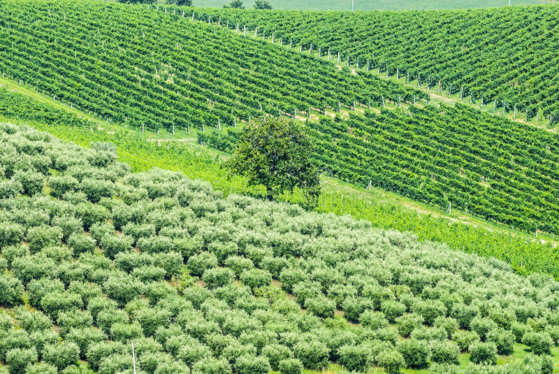 Download Marches Landscape (Italy) stock image. Image of field - 28798207