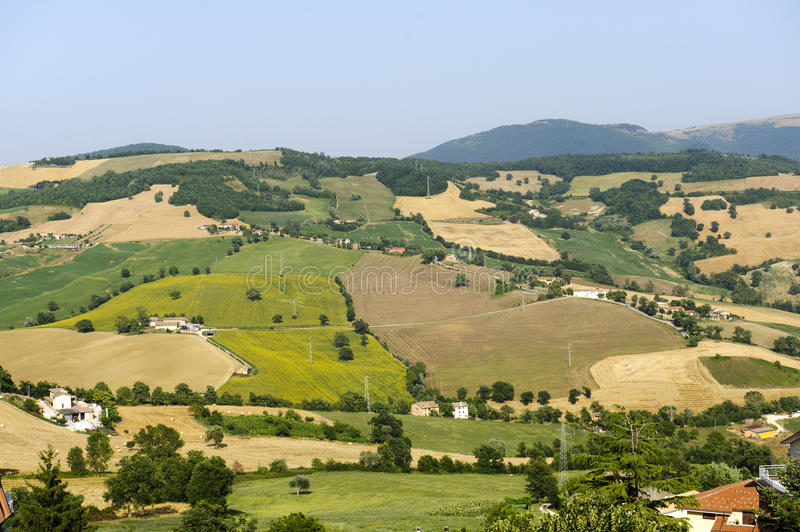Download Marches, Landscape At Summer Stock Photos - Image: 23398543
