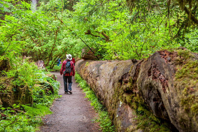 Marcheur dans la forêt tropicale image stock