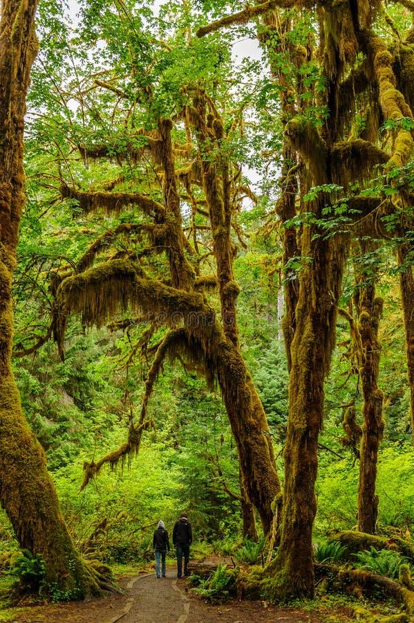 Marcheurs dans le chemin de la forêt tropicale images stock