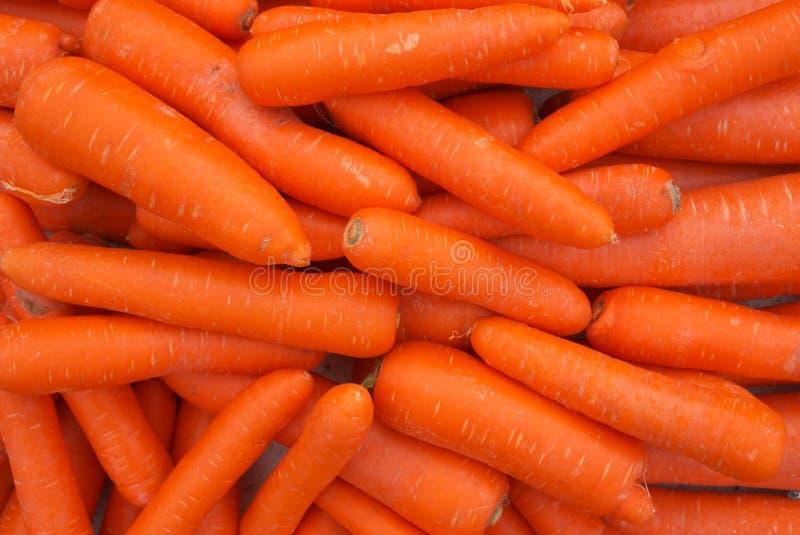 marchewka świeża obraz stock