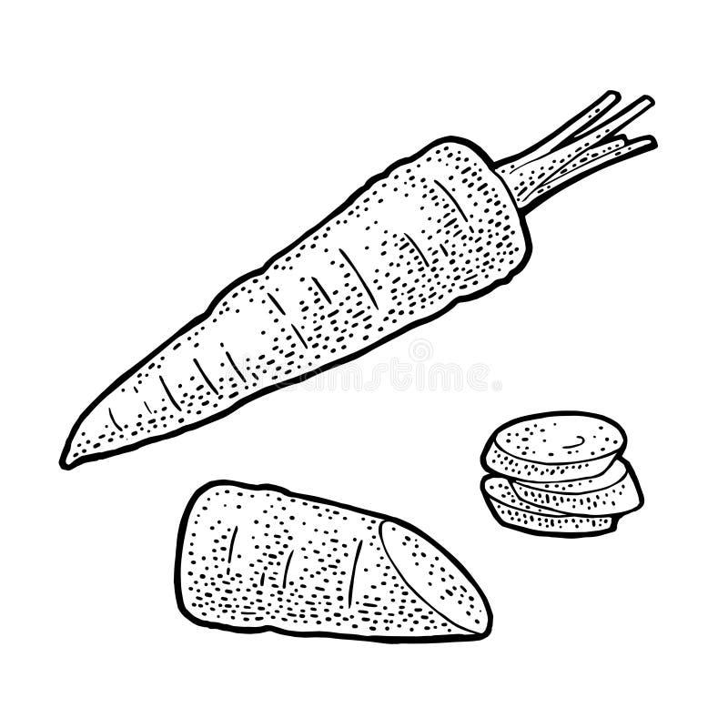 Marchewki całe, połówka i plasterek, Wektorowy czarny rocznika rytownictwo ilustracji