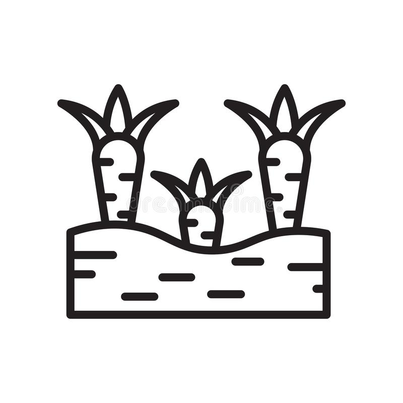Marchewki ikony wektoru znak i symbol odizolowywający na białym tle, marchewka logo pojęcie, konturu symbol, liniowy znak, kontur royalty ilustracja