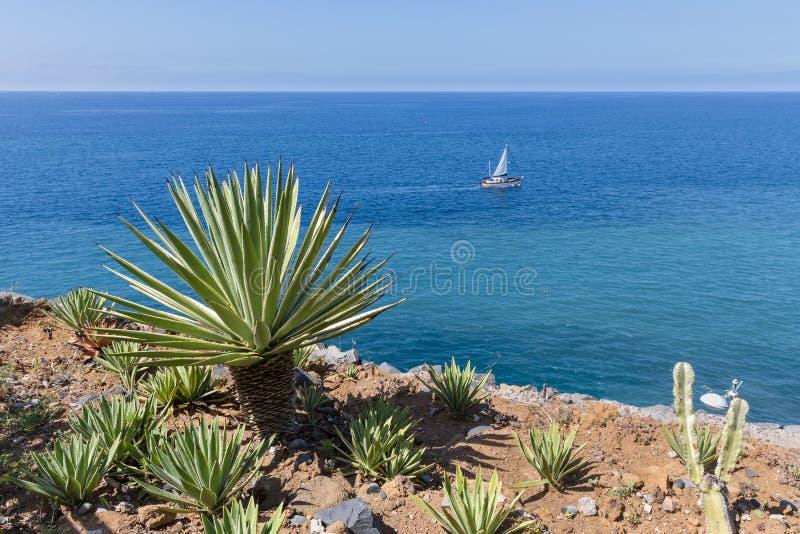 Marchez la Madère avec le palmier et le bateau de navigation à la mer photo stock