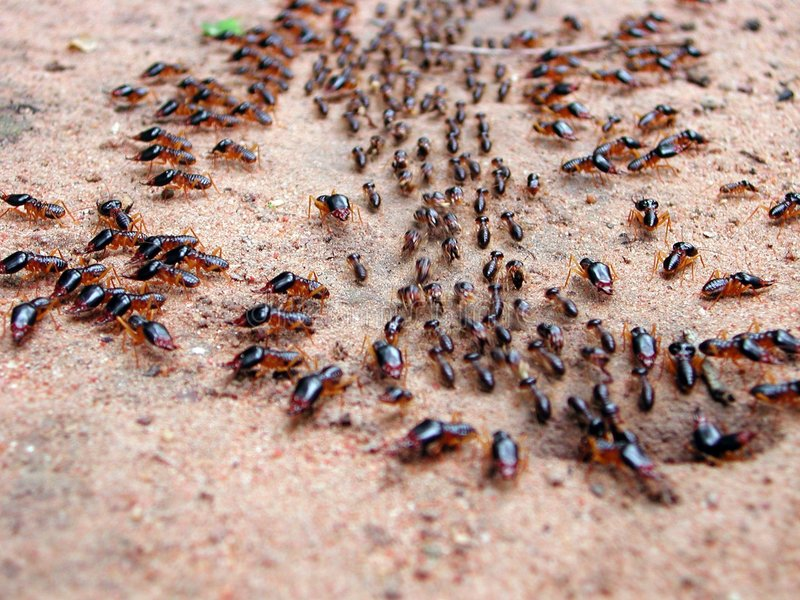 Download Marching ants stock image. Image of marc, line, outside - 350751