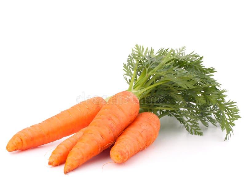 Marchwiany warzywo z liśćmi obraz royalty free