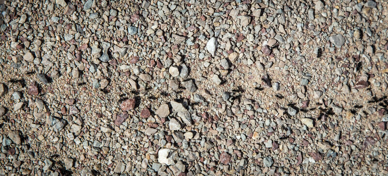 Marcia delle formiche fotografia stock libera da diritti