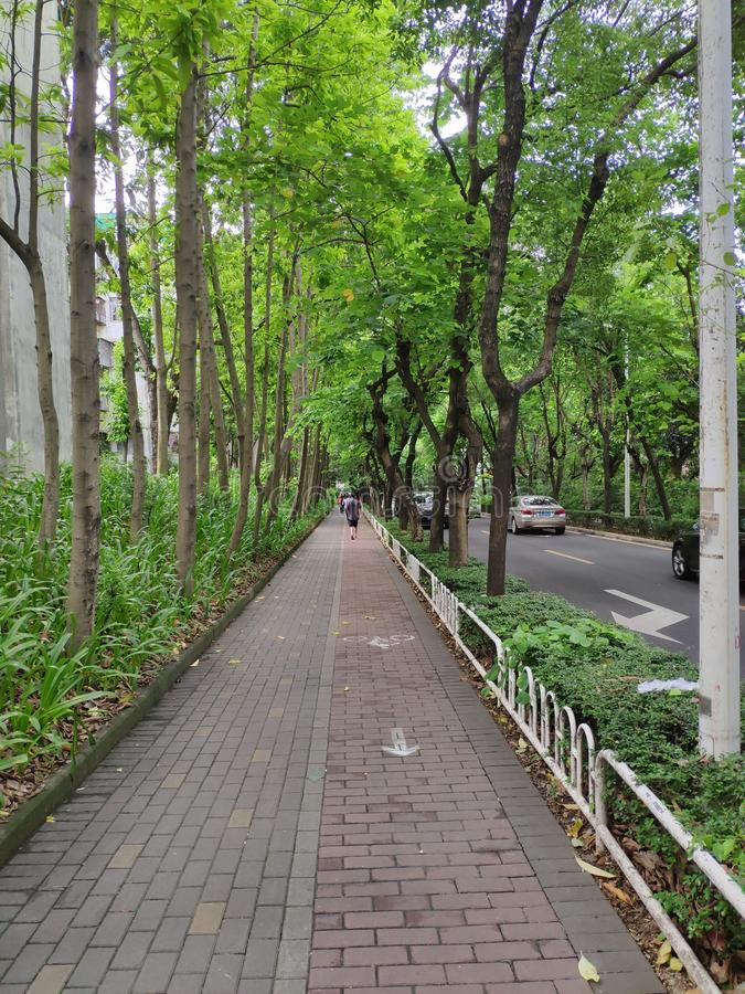 Marciapiede ad ottobre, Shenzhen, Cina fotografia stock libera da diritti