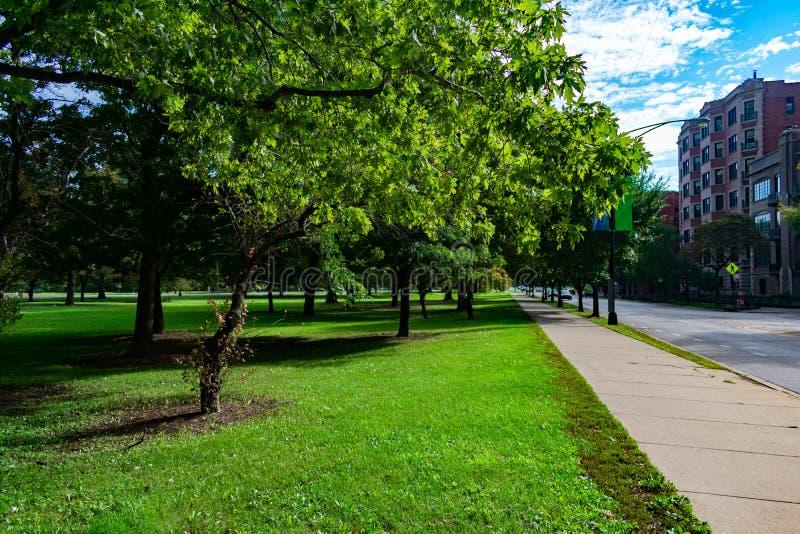 Marciapiede allineato albero in Lincoln Park Chicago immagine stock