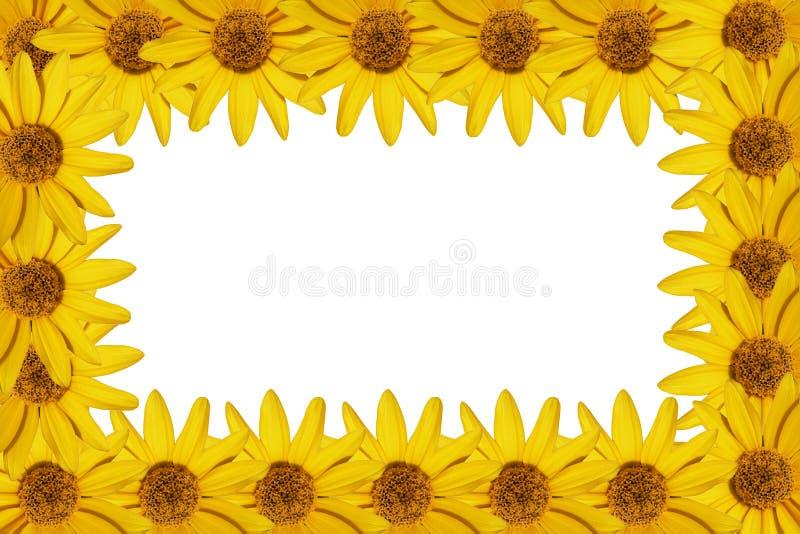Marco amarillo de las flores foto de archivo libre de regalías