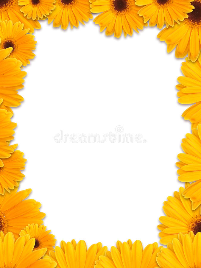 Marco amarillo hermoso de la flor imágenes de archivo libres de regalías