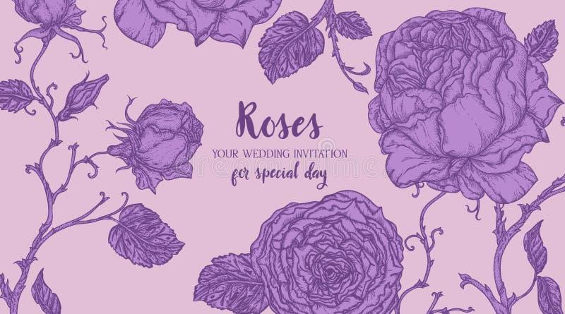 Marco azul de Rose stock de ilustración