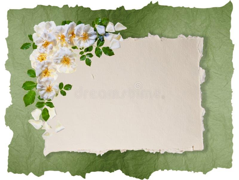 Marco blanco de las rosas imágenes de archivo libres de regalías