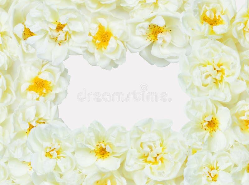Marco blanco de las rosas fotografía de archivo
