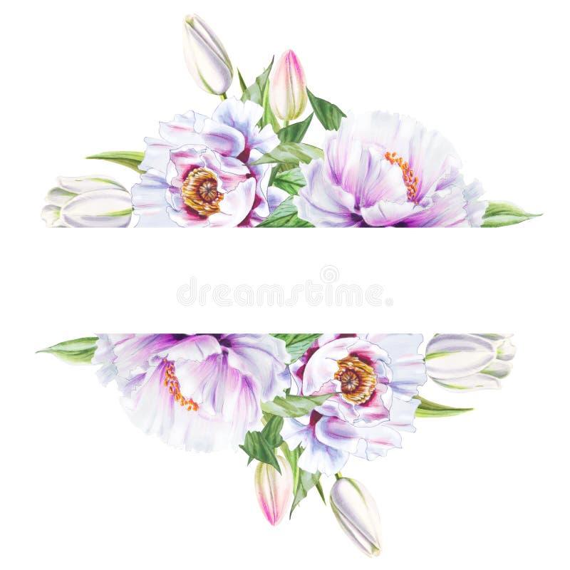 Marco blanco hermoso de la peonía y del tulipán Ramo de flores Impresi?n floral Dibujo del marcador ilustración del vector