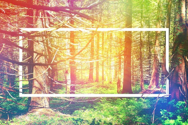 Marco blanco, integrado en el paisaje, para su contenido Bosque del cuento de hadas, paisaje de la montaña imagen de archivo