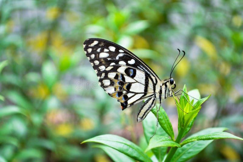 Marco Butterfly fotografia de stock