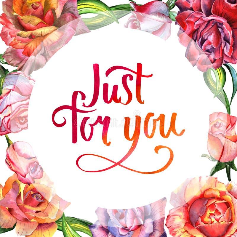 Marco color de rosa de la flor del Wildflower en un estilo de la acuarela aislado ilustración del vector