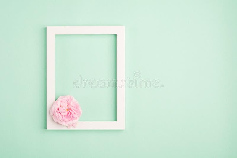 Marco color de rosa hermoso de la flor y de la foto en fondo en colores pastel de la menta fotografía de archivo libre de regalías