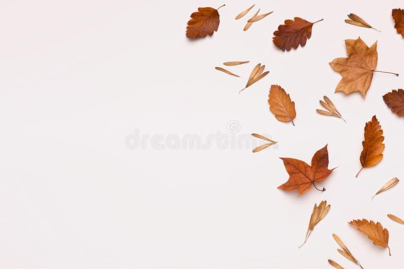 Marco creativo de otoño de hojas muertas marrones en blanco imagenes de archivo