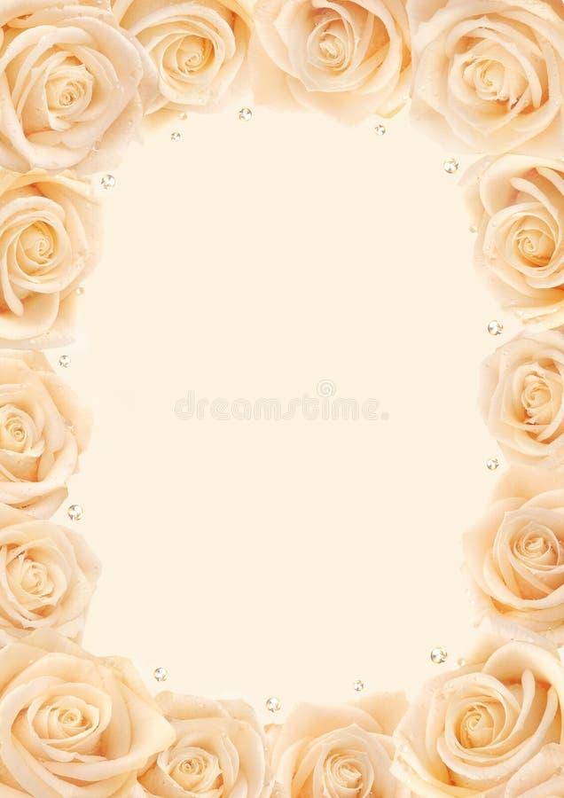 Marco cremoso de las rosas fotos de archivo libres de regalías
