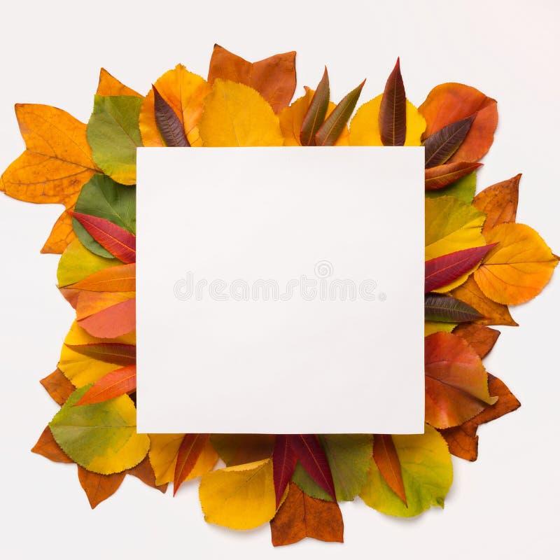 Marco cuadrado con el espacio en blanco para el texto con las hojas de otoño caidas imagen de archivo libre de regalías