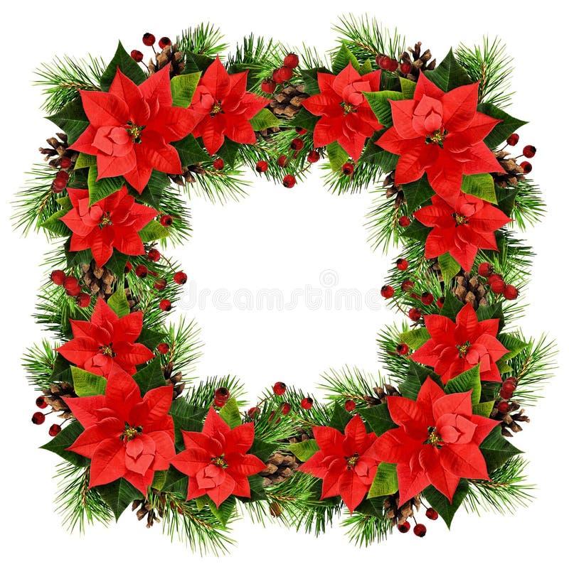 Marco cuadrado de la Navidad con las ramitas, los conos, las bayas y los poins del pino fotografía de archivo libre de regalías