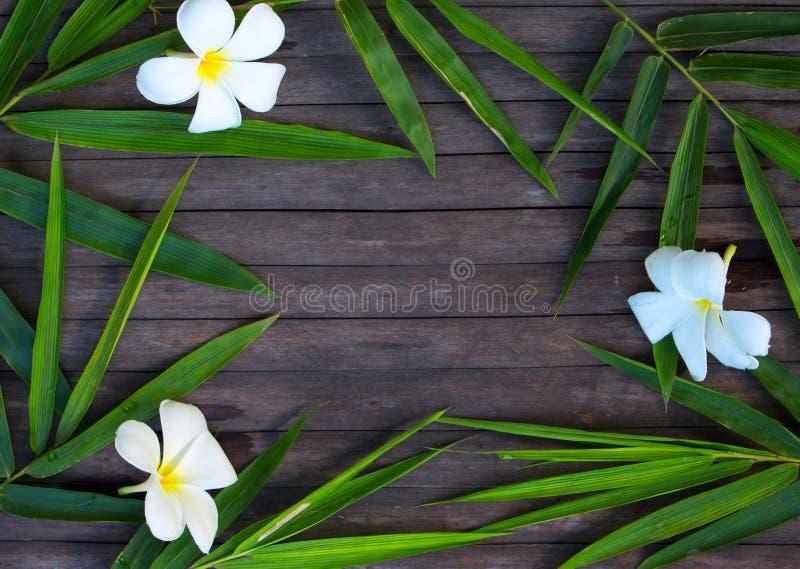 Marco de bambú de la hoja en fondo de madera rústico Flor de bambú de la hoja y del frangipani en la madera foto de archivo