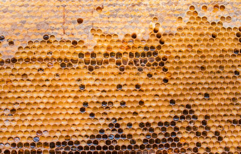 Marco de la cera despu?s de bombear la miel de ellos, cerca para arriba fotos de archivo libres de regalías