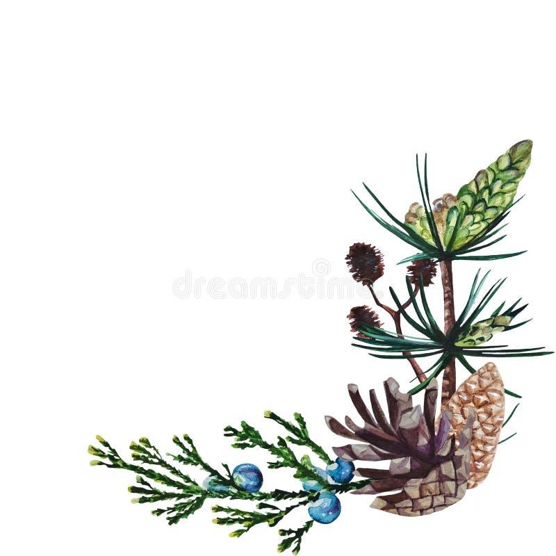 Marco de la esquina de la acuarela que consiste en el pino, ramas del enebro y del aliso y conos del pino ilustración del vector