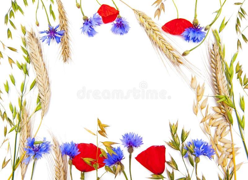 Marco de la flor fotografía de archivo