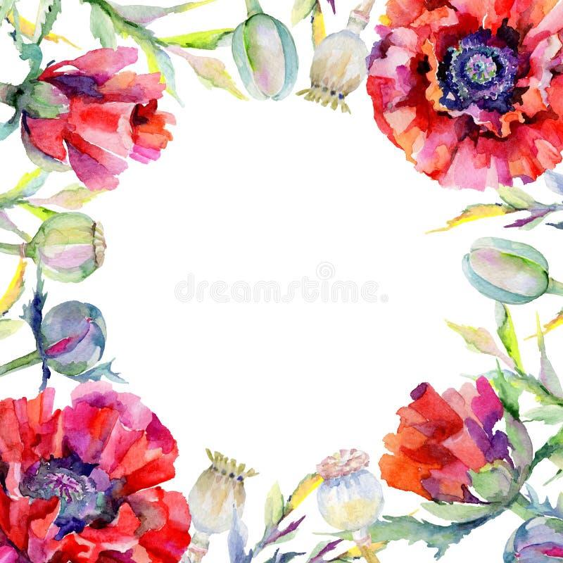 Download Marco De La Flor De La Amapola Del Wildflower En Un Estilo De La Acuarela Stock de ilustración - Ilustración de verde, aislado: 100527392