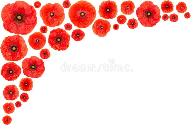 Marco de la flor de la amapola fotos de archivo libres de regalías