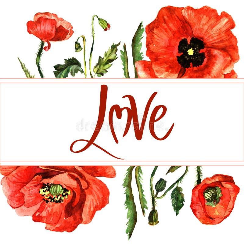 Marco de la flor de la amapola del Wildflower en un estilo de la acuarela aislado stock de ilustración