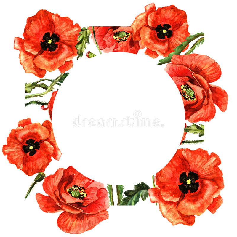 Marco de la flor de la amapola del Wildflower en un estilo de la acuarela aislado ilustración del vector