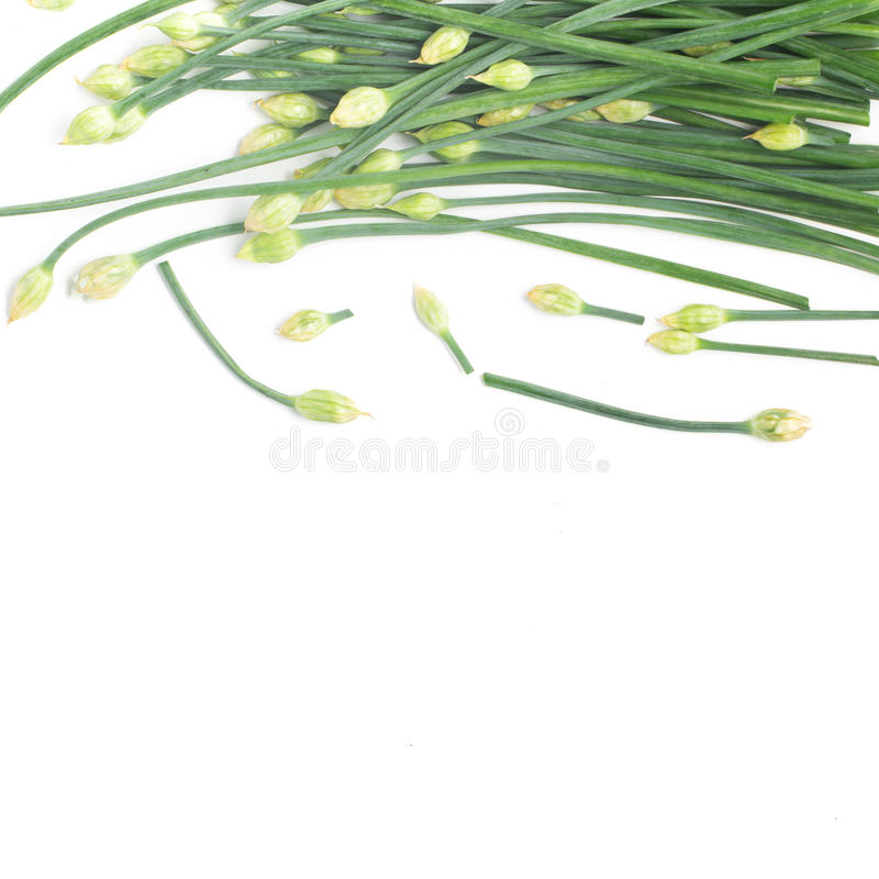 Marco de la flor de las cebolletas de ajo foto de archivo