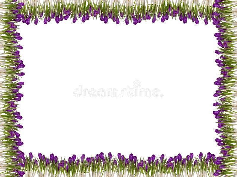 Marco de la flor del resorte imágenes de archivo libres de regalías