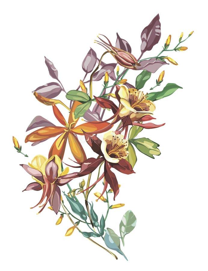 Marco de la flor del verano en un estilo de la acuarela aislado Nombre completo de la planta: Crocosmia, Aquilegia Flor de la acu ilustración del vector
