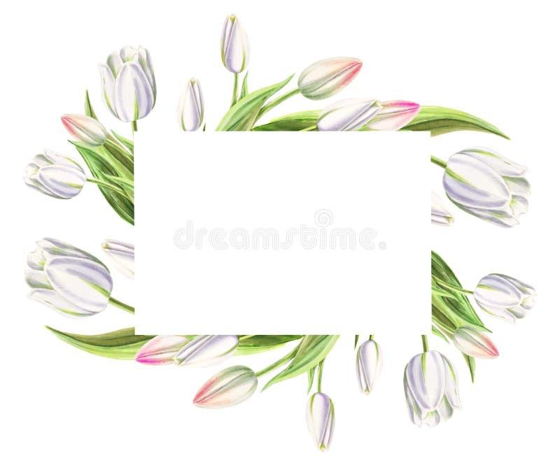 Marco de la foto y de texto de tulipanes blancos hermosos Dibujo del marcador Pintura de la acuarela Copie el espacio imagen de archivo libre de regalías