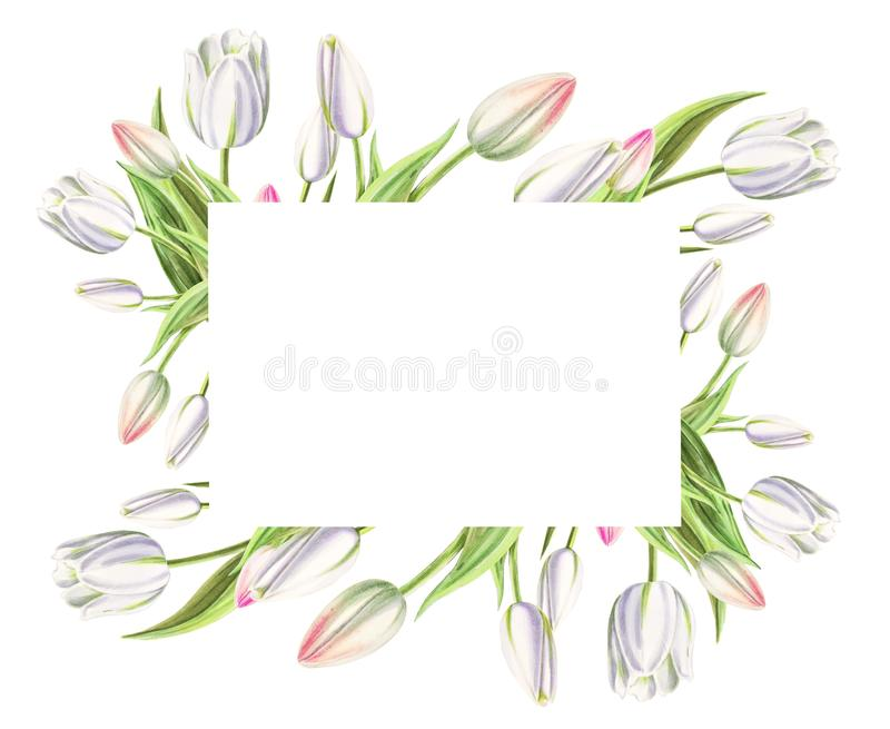 Marco de la foto y de texto de tulipanes blancos hermosos Dibujo del marcador Pintura de la acuarela Copie el espacio imagen de archivo