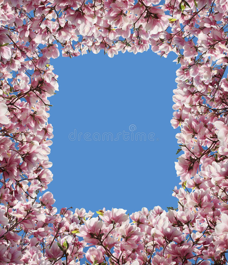 Marco de la frontera de la flor de la magnolia stock de ilustración